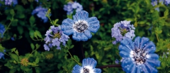 nature,culture,jardins,chaumont-sur-loire,le pouvoir des fleurs