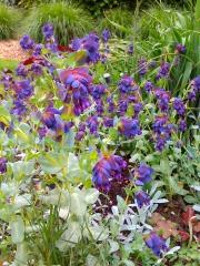 jardins de chaumont,nature